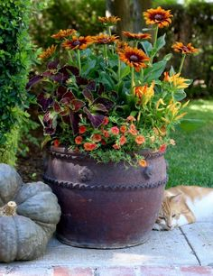 Container Flowers Ideas Unique Best Container Gardens for Autumn Images On Pinte… - Container Gardening Fall Planters, Garden Planters, Outdoor Planters, Autumn Garden Pots, Flower Planters, Indoor Outdoor, Autumn Decorating, Fall Decor, Decorating Ideas