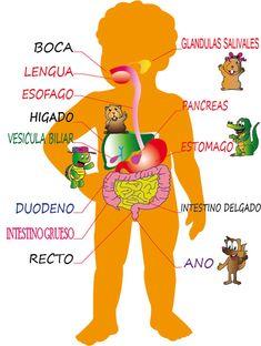Ficha y material interactivo. El aparato digestivo se encarga de meter los alimentos en el cuerpo y convertirlos en nutrientes.