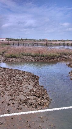 St Augustine FL Oyster beds