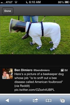 Bee keeper dog