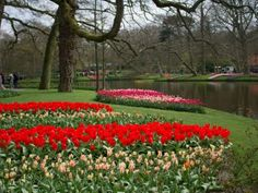 Viaggio ad Amsterdam: Keukenhof, il parco più colorato che ci sia! - Giruland
