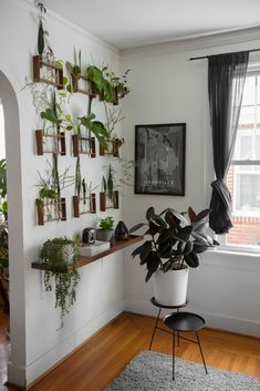 Proudest DIY: An Apartment Therapy alumnus created a wall against a bright window to propagate his house plants.