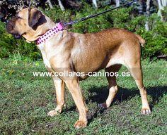 Collar de lujo para perros Cane Corso diseño fashion tachuelas plateadas sobre cuero rosado