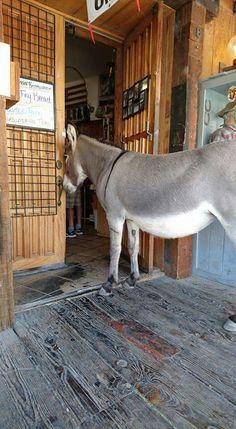 Holbrook Arizona, Kangaroo, Goats, Horses, Animals, Baby Bjorn, Animales, Animaux, Animal