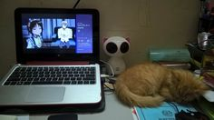 Happily listening to CD1 of A State Of Trance 2017 while watching Shounen Maid anime but this little Furball just keeps on sleeping peacefully there.
