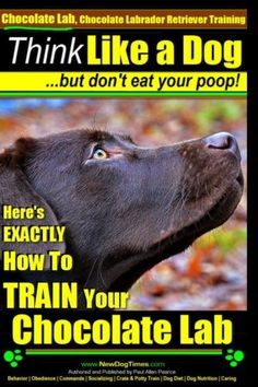 Chocolate Lab Chocolate Labrador Retriever Training  Think Like a Dog But Dont Eat Your Poop Heres EXACTLY How To TRAIN Your Chocolate Lab Volume 1 ** See this great product. (Note:Amazon affiliate link) #DogTraning
