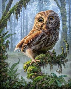 Owl Perch by Phil Jaeger | Nature | 2D | CGSociety   DIGITAL ART