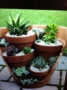 creative garden ideas and landscaping tips Thanks for watching this video! We would like to introduce garden design ideas diy garden, pots for plants, Diy c. Succulent Gardening, Succulent Pots, Cacti And Succulents, Garden Planters, Container Gardening, Cactus Garden Ideas, Organic Gardening, Cactus Planters, Creative Garden Ideas