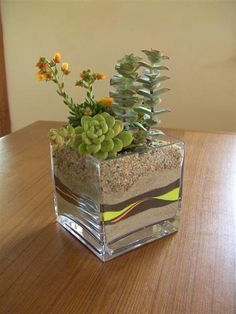 By Succulently Urban >Dang it, this makes me want to dig those ugly vases out of my donation pile!