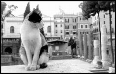 I gatti di Roma |  Cats of Rome