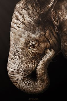 A Baby Elephant named Rungwe