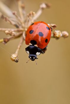 Ladybird by James King