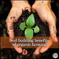 Soil Building Benefits Of Organic Farming. Read Here: http://www.cornucopia.org/2013/09/study-shows-soil-building-benefits-organic-farming