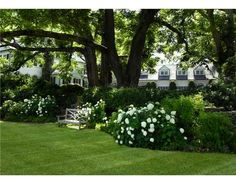 Blanket of lawn, curves, green beds with sculpted heights, white blossoms. Relaxing, serene