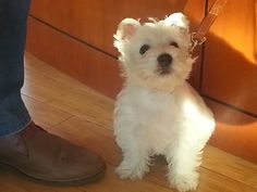 Even the cute puppies love to stop by Scheid Wine Tasting room on San Carlos and in Carmel by the Sea, CA. Wine Tasting Room, Carmel By The Sea, Puppy Love, Cute Puppies, Animals, San Carlos, Animales, Animaux, Animal