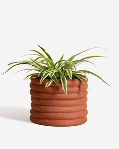 Your plant will feel right at home in its very own pot that appears to be made out of a series of tubes. This planter was made by hand from a textural, rust colored clay. #dwellshop #zachklein #favoritethings #moderndecor #cabinporn