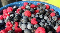 Eating berries may slow brain's decline