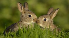 Baby Rabbits Playing « Other Cute Animals « HD Animal Wallpaper