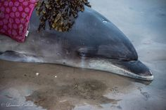 Woman Makes A Wrong Turn, Ends Up Saving A Dolphin's Life