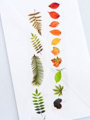 Set of 2 clear tapes with graphic designs of leaves.Each roll is 20m long and 20mm wide. The set comes boxed, and would also make a great gift for tape...