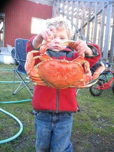 dungeness crab from http://www.theoceanharvest.com