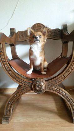 Zipper op de ouderwetse stoel van oma