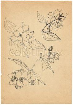 Image of 'jasmine hand drawing sketch'