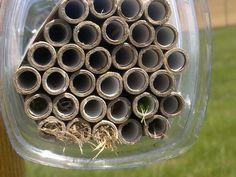 Certaines guêpes solitaires peuvent également utiliser les nichoirs pour y construisent leurs nids de la même manière que les abeilles solitaires,avec de la terre ou des végétaux. Ce sont essentiellement des insectes prédateurs, qui vont déposer des proies comme nourriture pour leurs larves, à la place du pollen et du nectar. (Ces guêpes sont intéressantes pour la lutte contre les ravageurs car leurs proies peuvent être des ravageurs de cultures comme des Coléoptères ou des mouches…)