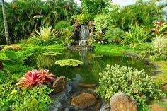 Beautiful tropical gardens ~ Hanalei, Kauai, Hawaii