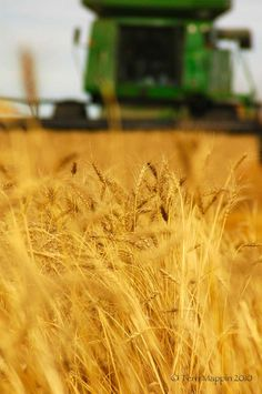 is where i was born and raised. golden wheat dancing in the wind. my favorite guy sitting in his john deere green combine. Country Farm, Country Life, Country Girls, Country Living, Harvest Time, Harvest Moon, Golden Harvest, Fields Of Gold, Farm Photography