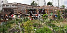 """La première édition des """"Innovations in Politics Awards"""" (Trophées européensde l'innovation politique) a récompenséla stratégie de résilience urbaine expérimentée à Gennevilliers et à Bagneux. Retour sur un succès écologique francilien."""