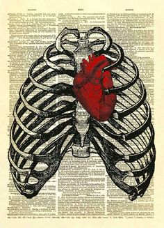 Human Thorax with Human Heart Dictionary Art Print No. 10 Two antique medical illustrations combined to create one amazing image. A human thorax surrounds a [. Anatomy Art, Anatomy Drawing, Human Anatomy, Medical Art, Dictionary Art, Graphics Fairy, Heart Art, Figure Drawing, Art Inspo
