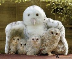My Owl Mom!