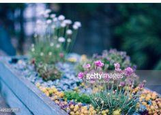 Planter for blue themed garden.
