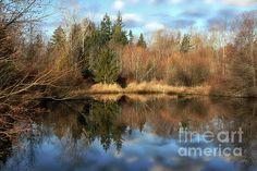 Cougar Pond by Cheryl Rose