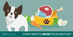 15 EASY WAYS TO BOOST YOUR DOGS DIET-DNM