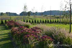Garden Design, Vineyard, Gardening, Google, Outdoor, Outdoors, Vine Yard, Lawn And Garden, Vineyard Vines