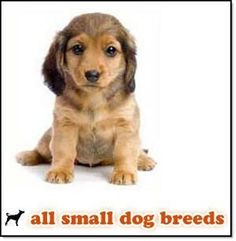 Maricopa county animal care and control! All Small Dog Breeds, Big Dog Breeds, Big Dogs, Large Dogs, Small Dogs, Dog Breed Finder, Pet Care, Puppy Love, Animal Rescue