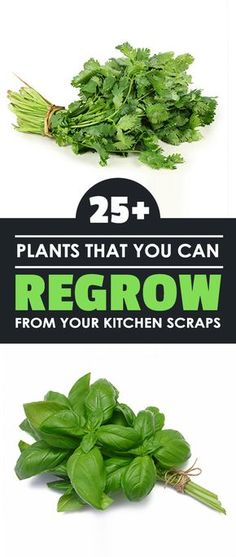 Did you know you can regrow plants from kitchen scraps? A lot of different fruits and veggies can be regrown and we'll show you exactly how to do it.
