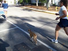 8 Great Ways You and Your Dog Can Stay Active Together | Way Cool Dogs!