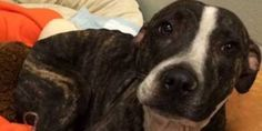 Urge Florida to Step Up on Animal Cruelty Laws & Regulations to Stop Such Abuse  -  http://www.thepetitionsite.com/631/034/078/urge-florida-to-step-up-on-animal-cruelty-laws-regulations-to-stop-such-abuse/