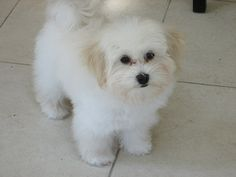 Fluffy puppy   ...........click here to find out more     http://googydog.com