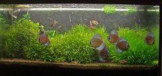 200L Aquarium 10-03-07