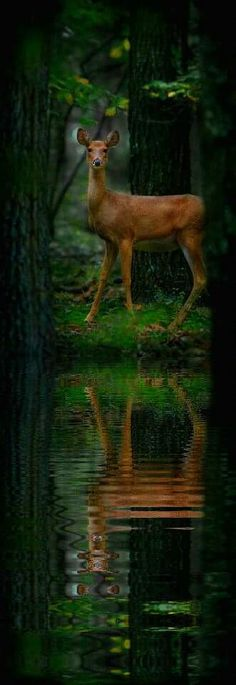 """""""As the deer pants for streams of water, so my soul pants for you, my God."""" Psalm 42:1 NIV"""
