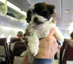 What It Costs to Fly with Your Dog in the US
