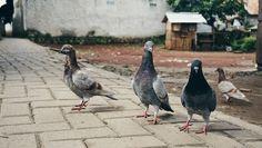Birds will be birds