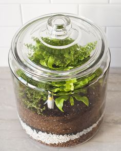 How to Make a Closed Terrarium is part of Living Room Plants Terrarium - Looking for an easy way to add a splash of green to your home decor See how Kim and Scott Vargo of Yellow Brick Home make a stylish closed terrarium Terrarium Closed, Garden Terrarium, Succulent Terrarium, Terrarium Ideas, Glass Terrarium, Hanging Terrarium, Indoor Garden, Indoor Plants, Outdoor Gardens