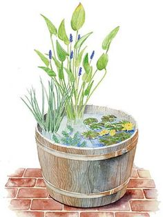 Plans for a Whiskey Barrel Water Garden by Ruth Rogers Clausen, countryliving. #Water_Garden #countryliving #Ruth_Rogers_Clausen