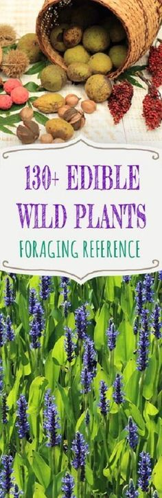 A foraging reference listing both common and less-known wild edibles from agave to Yaupon holly.