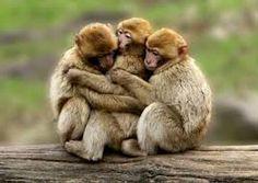 Imatges trobades pel Google de http://www.imagenesdeamoryamistad.com/wp-content/uploads/2013/03/animales-amor-y-amistad-1.jpeg